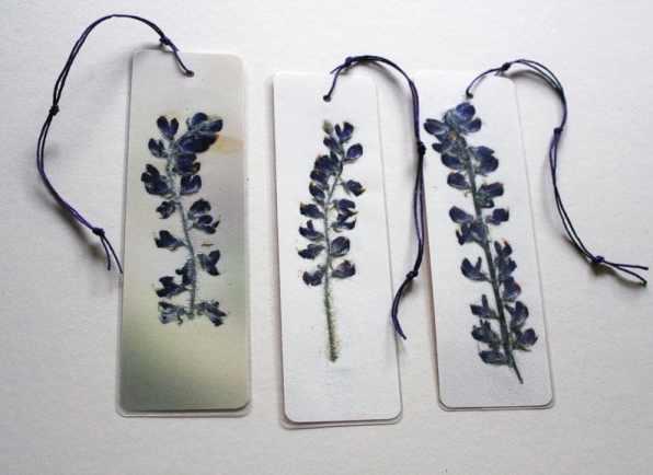 Wild Lupine pressed flower bookmark