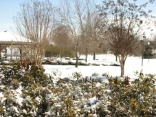 "Snowy park with bushes. Camera on ""snow"" setting. Focus on foreground."