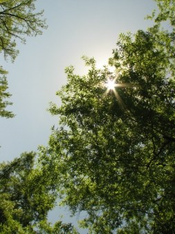 looking up at the sun peeking through the leaves of a large oak tree