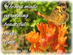 SCRIPTURE -- Ecclesiastes 3:11 written on the photo of a butterfly on a milkweed flower