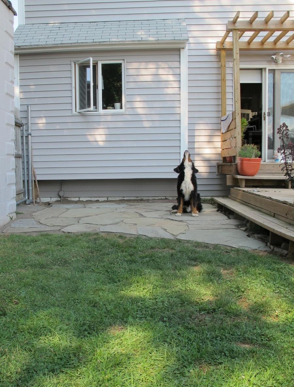 The 12-hour DIY Flagstone Patio | merrypad on Flagstone Backyard Patio id=67297