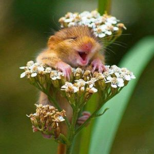 play in the flowers and be joyful