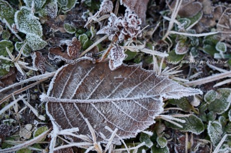 frost bitten... 2