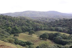 Forests filled with indigenous trees. Less than 2% of Mauritius is left with forest cover.