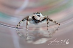 2018 - August - Friendly Neighborhood Spider-Web Version-5