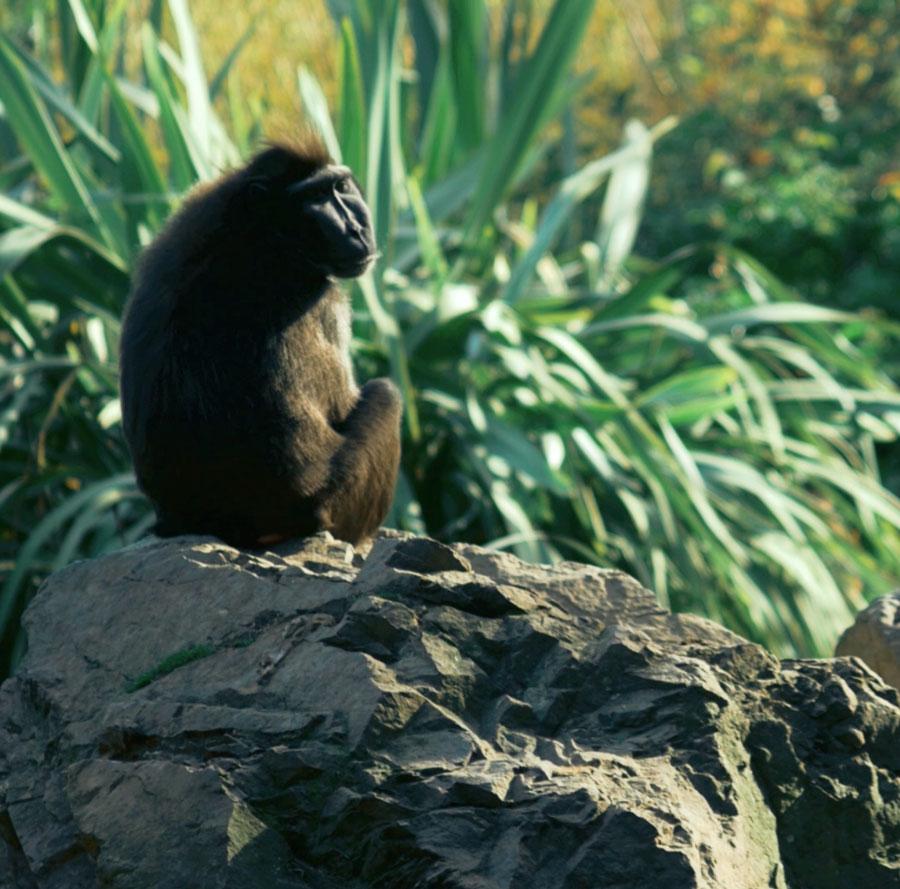 video production - dublin zoo