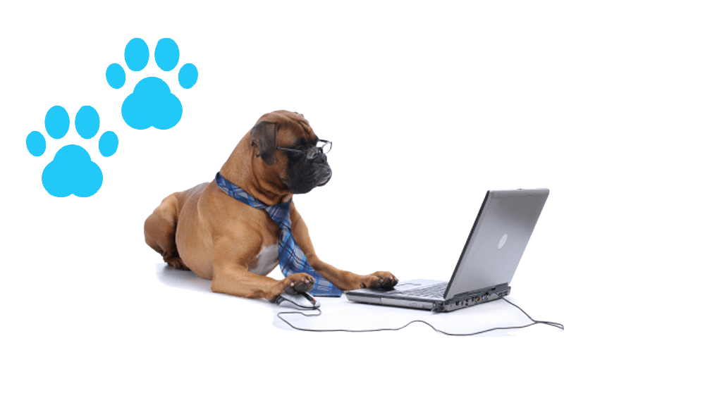 %name Software para Pet Shop