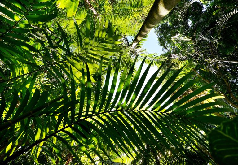 Merwin Palm Photo by Matthew Thayer at The Maui News
