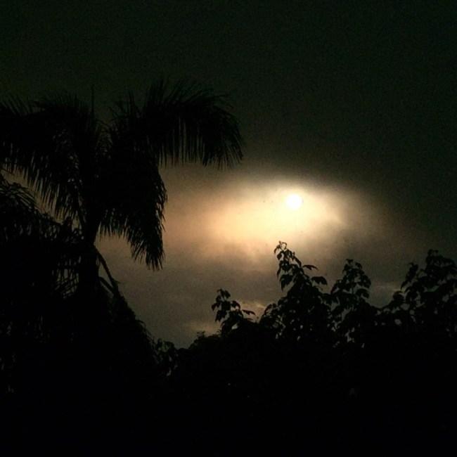 Moon and Palm by Sara Tekula