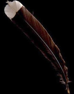 Huia Feather - Telegraph