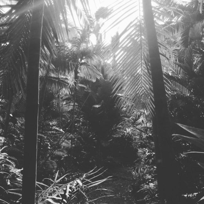 Merwin Palms Photo by Sara Tekula
