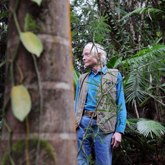 Merwin in Palm Forest by Sarah Cavanauch
