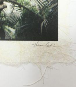 Madagascar Palm Close Up on Signature