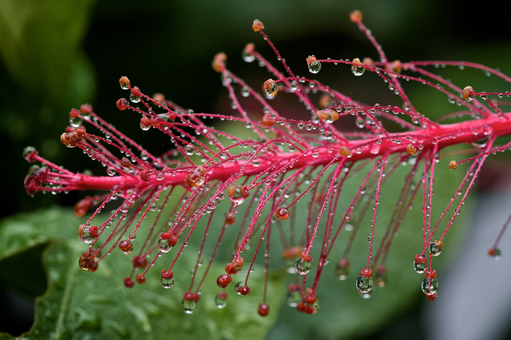 Rain Light - Photo by Larry Cameron