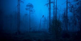 """""""Noah's Raven"""", by W.S. Merwin"""