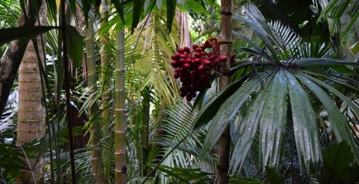 The Merwin Conservancy Palms - Sara Tekula
