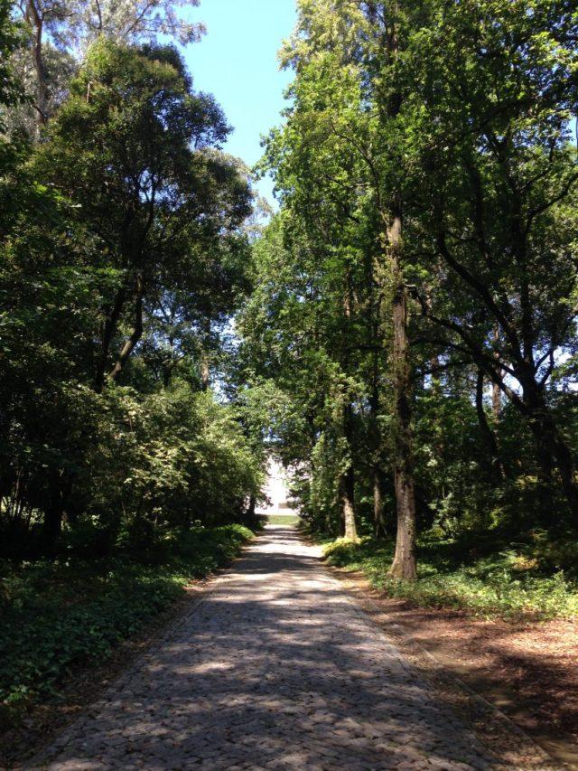 12. Jardines de Serralves.