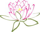 pink-lotus-2-variation-md
