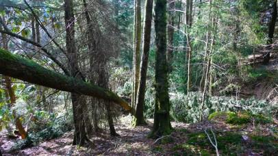 12 Broken-tree-