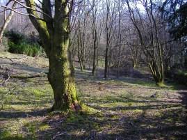 The soft fruit garden in February 2007