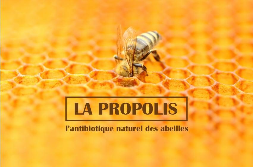 la propolis