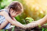 """Au început înscrierile pentru Programul Național  de plantat păduri """"Pădurea Mea"""