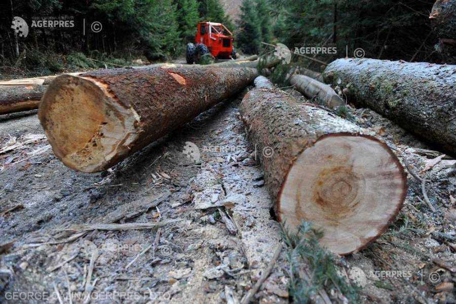 Estimările tăierilor ilegale de lemn din România sunt eronate şi lipsite de fundamentare ştiinţifică (industria lemnului)