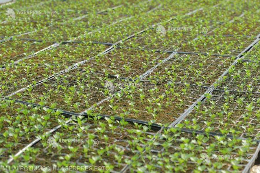 Uniunea Salvăm Ţăranul Român solicită aprobarea programului de susţinere a producţiei de legume în spaţii protejate