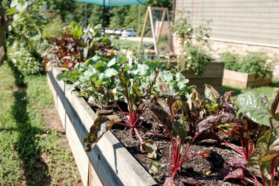 7 sfaturi inteligente pentru a uda mai eficient grădina de legume în această vară