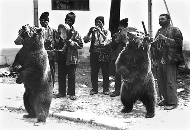 jocul-ursului
