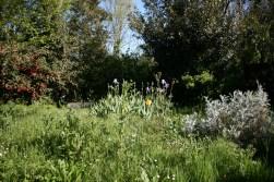 Arrière-jardin avant tonte...