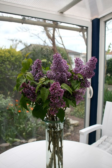 Lilas et photo de MS Bock Digne 25 avril 2016