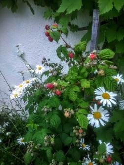 Photo MS Bock Digne 30 mai 2016