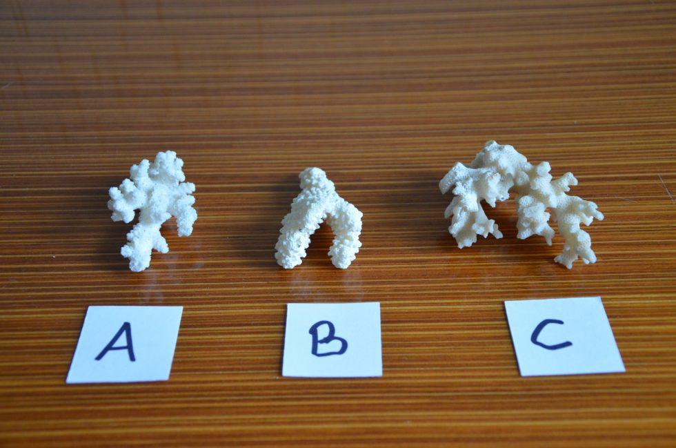 3 morceaux de corails destinés à financer la sauvetage des coraux brisés à Tahiti