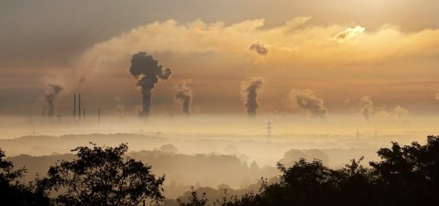 Los bosques maduros no consiguen absorber el CO2 extra que emitimos