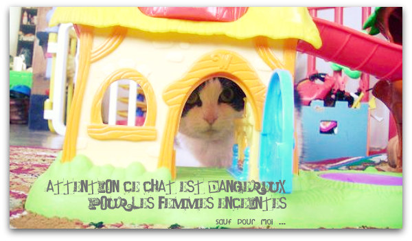 chat dangereux toxoplasmose