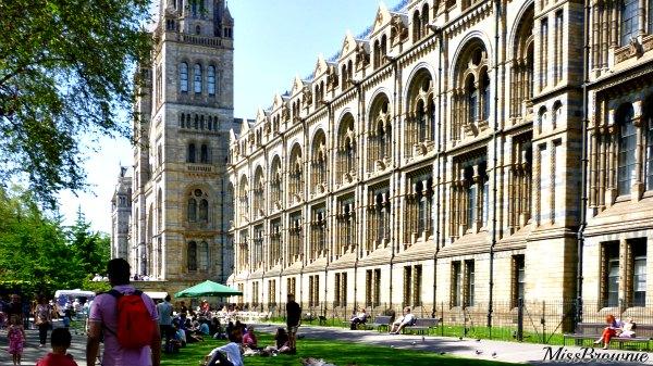 London-musee-histoire-naturelle