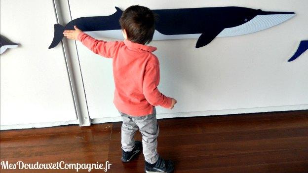 baleine-chichi