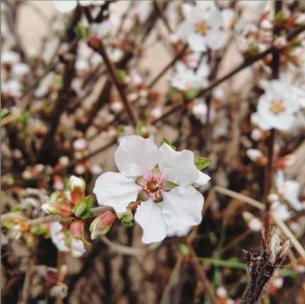 fleurs printemps mars semaine 11 2019