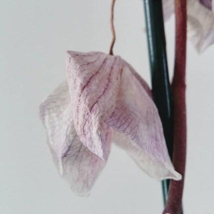 orchidée fanee semaine 10 2019