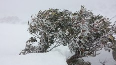 Freezing gum on the top of the mountain