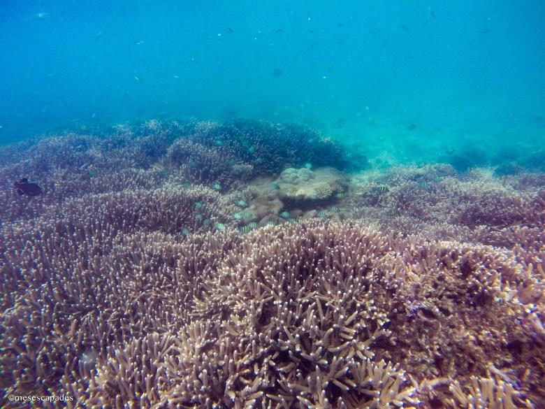 Explorer les fonds de mer à Pigeon Island