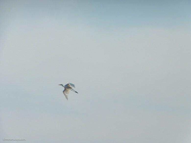 Les oiseaux d'Arugam Bay