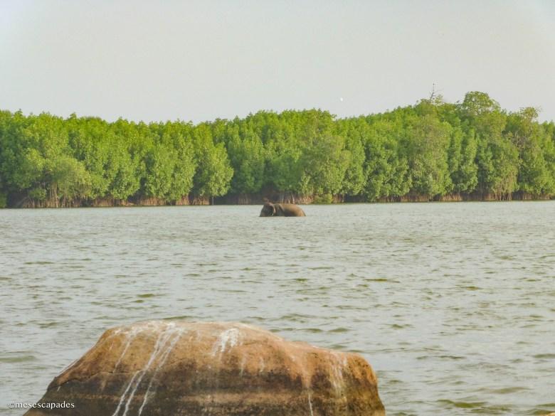 Découverte d'éléphants sauvages au Sri Lanka