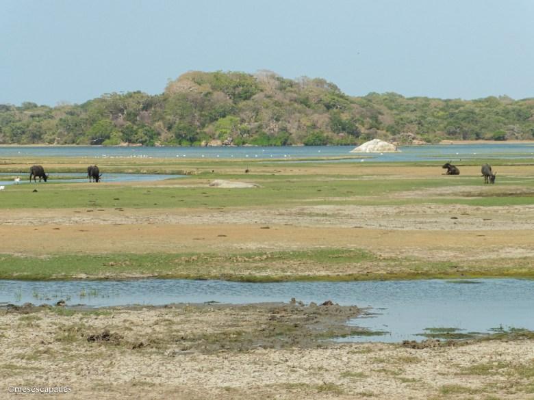 Quelles étapes faire au Sri Lanka ?