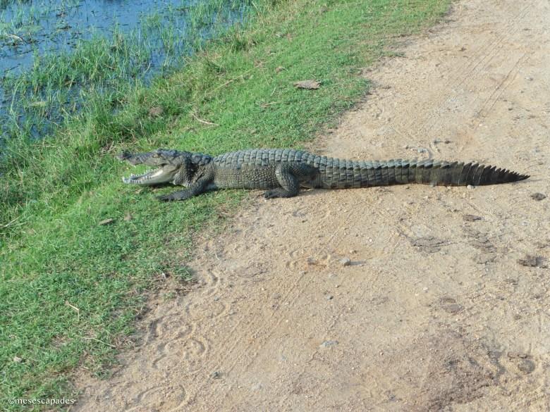 Le meilleur safari du Sri Lanka