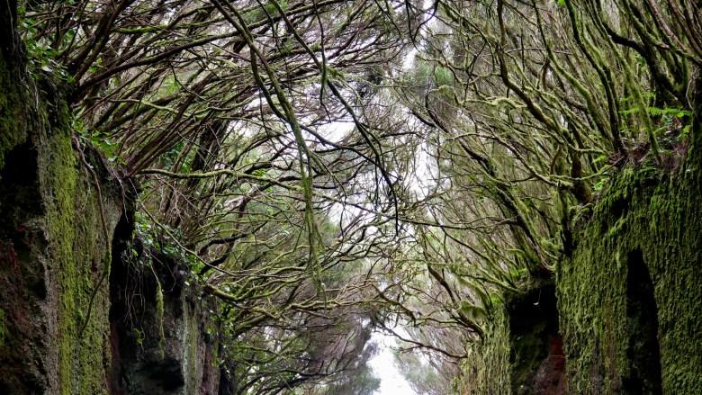 Randonnées à Tenerife : balade dans les montagnes de l'Anaga et passage par sa forêt enchanteresse