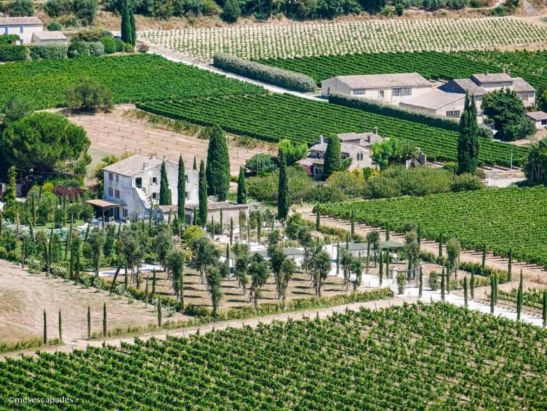 Vue sur les vignes depuis Ménerbes