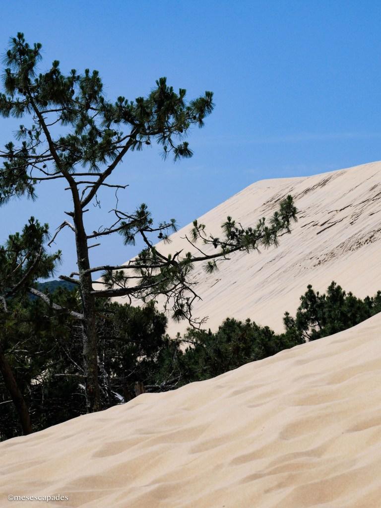 Les paysages magnifiques de la Dune du Pilat