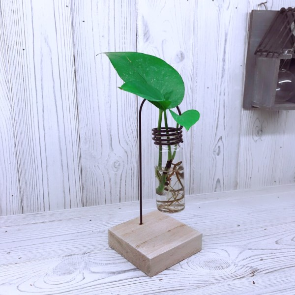 Hydroponic Glass Tube Planter